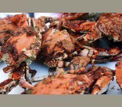 Buy 1 Get One Free Items - Maryland Crabs, Blue Crab, Blue